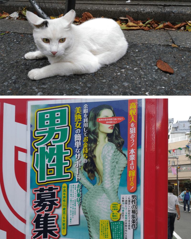 地域猫ちゃんと謎のチラシ
